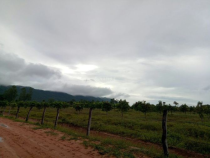 Cambodian Land Trade: Land Property Rights