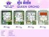 Queen Orchide