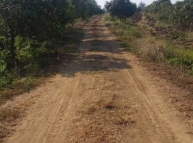 Good Land For Sale In Battambang