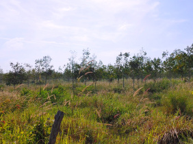 143 Hectares land for sale @ Phnom Sruoch District, Kampong Speu Province, KM 98