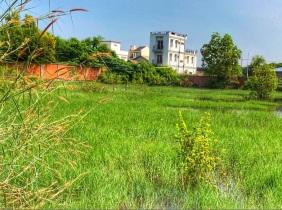SiemReap Land For Sale $350/㎡